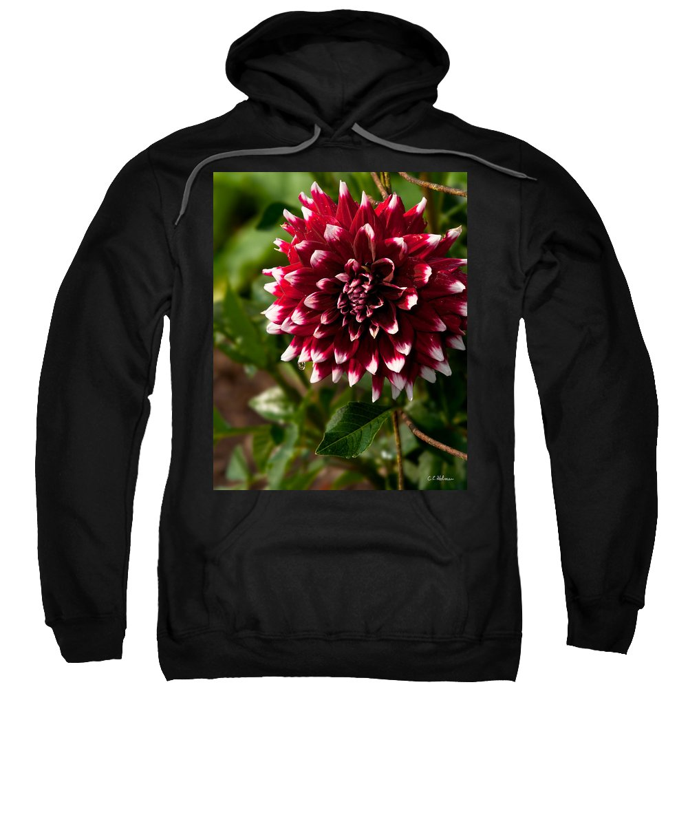 Flower Sweatshirt featuring the photograph Burst Of Red by Christopher Holmes