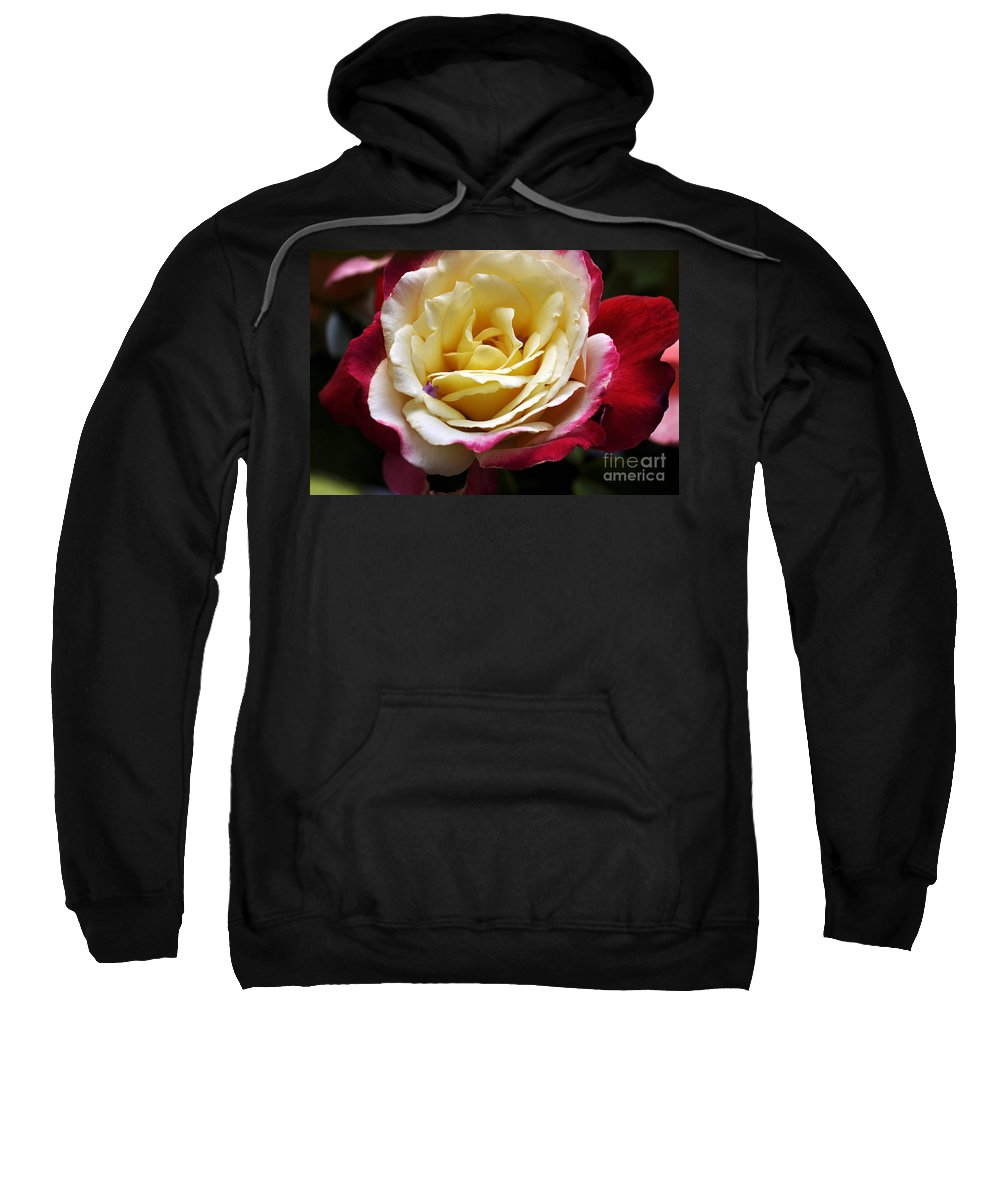 Clay Sweatshirt featuring the photograph Burst Of Rose by Clayton Bruster