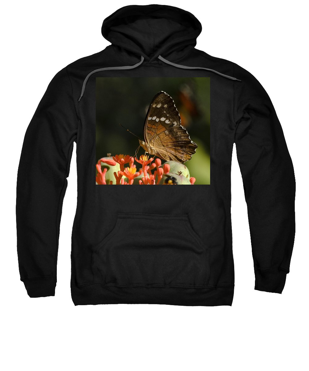 Butherfly Wings Flower Red Brown Green Venezuela Botanic Garden Sweatshirt featuring the photograph Butherfly by Galeria Trompiz