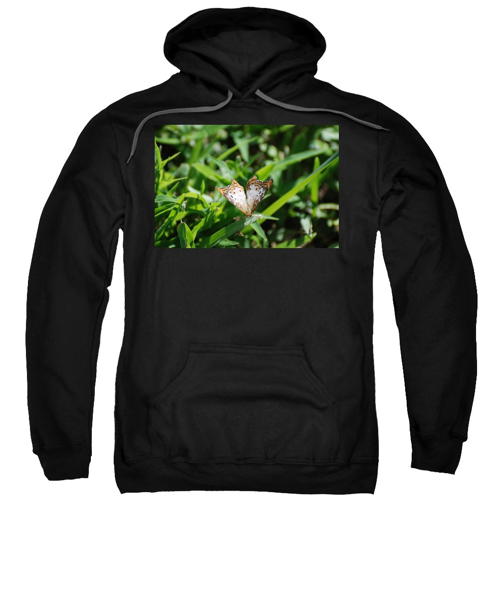 Butterfly Sweatshirt featuring the photograph Butter Fly by Rob Hans