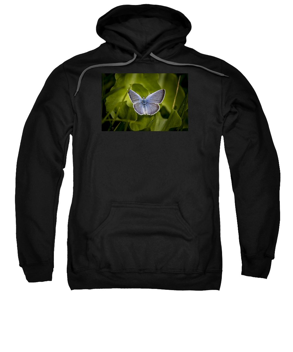 Sweatshirt featuring the photograph Butterfly 11 by Reed Tim