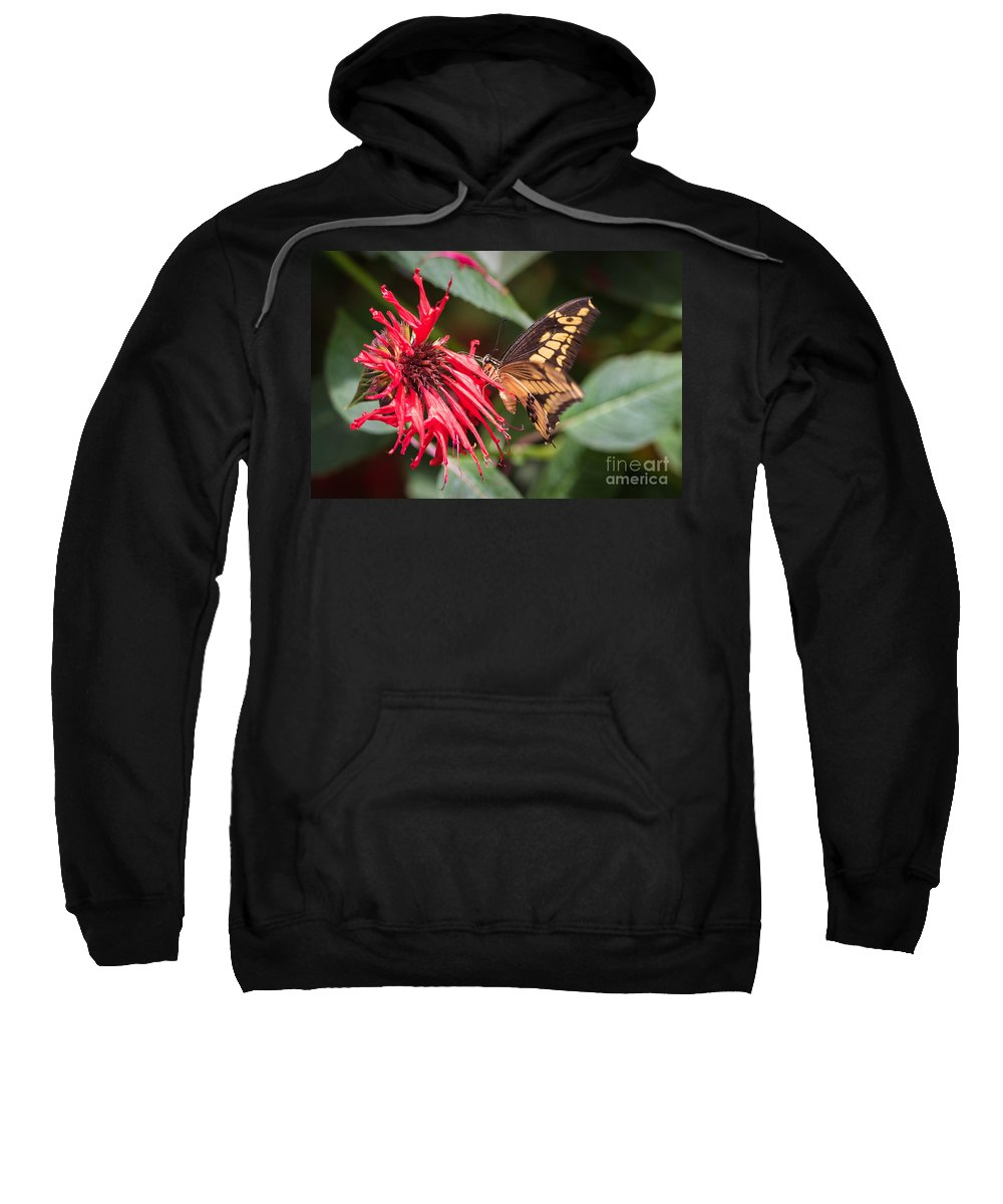 Butterfly Sweatshirt featuring the photograph Butterfly 5 by Wesley Farnsworth