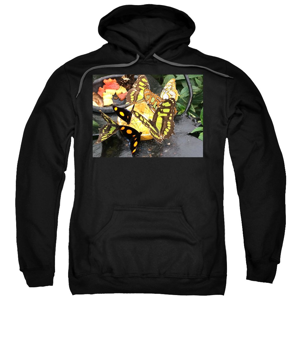 Butterfly Sweatshirt featuring the photograph Butterfly Feast by Natalia Wallwork