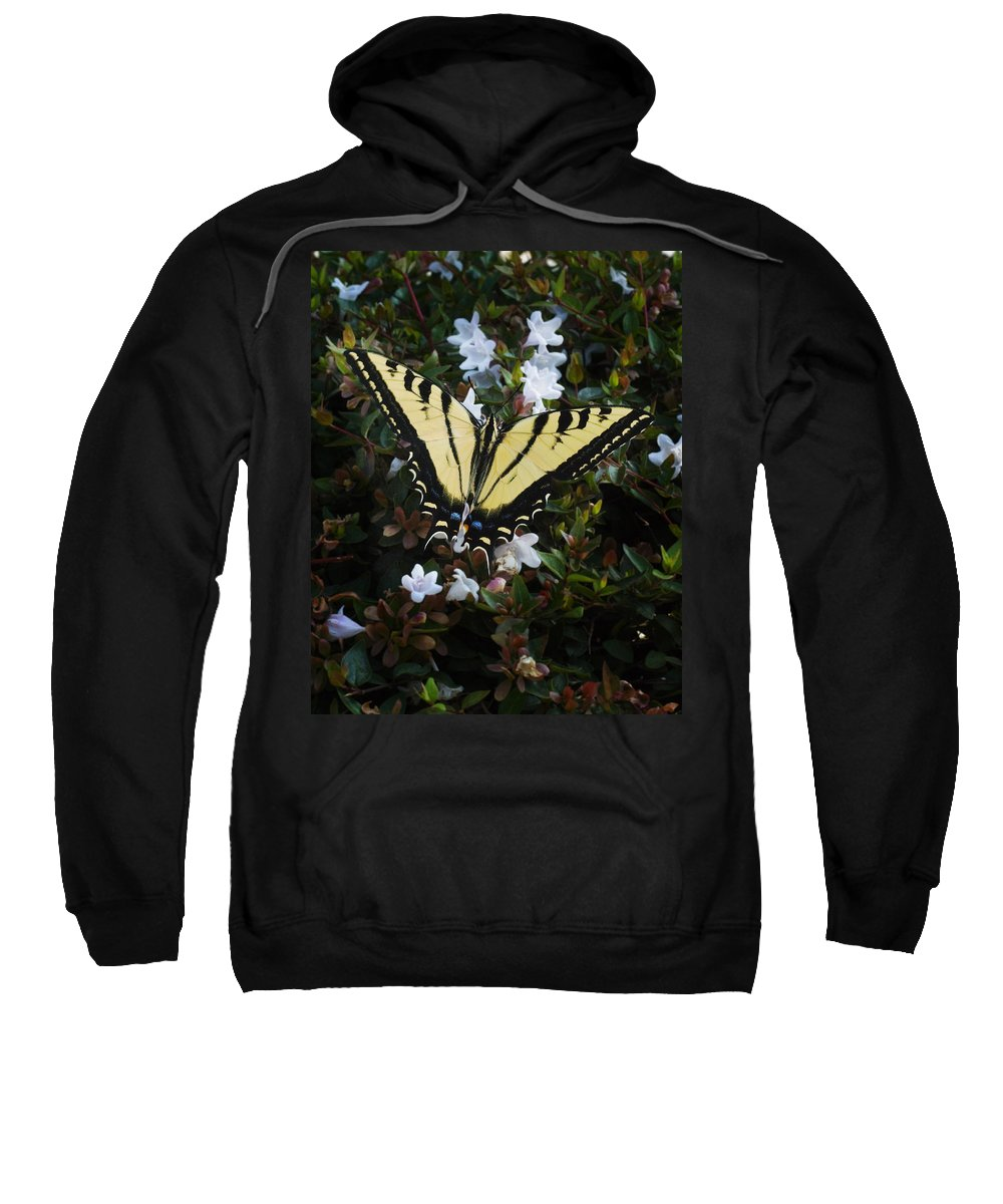 Butterfly Sweatshirt featuring the photograph Butterfly by Kelley King
