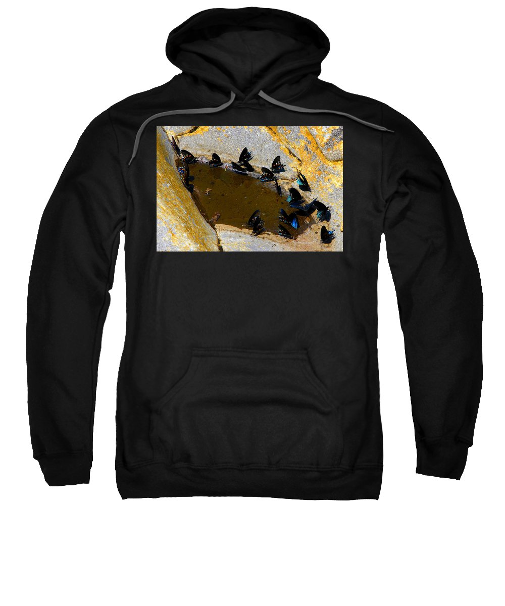 Butterflies Sweatshirt featuring the photograph Butterfly Pool by David Lee Thompson