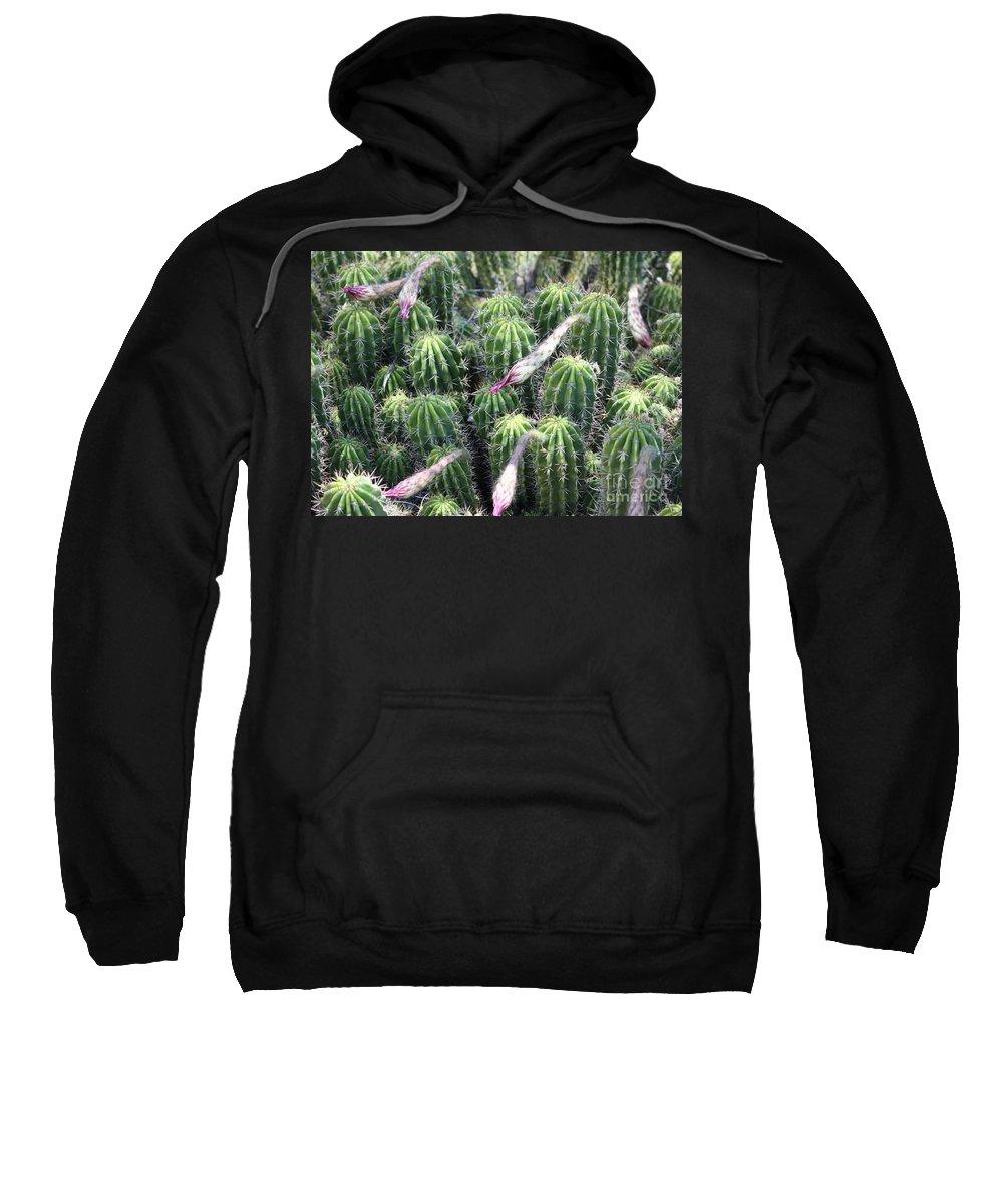 Cactus Sweatshirt featuring the photograph Cactus Drama by Carol Groenen