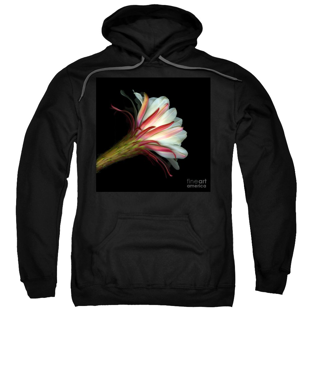 Scanart Sweatshirt featuring the photograph Cactus Flower by Christian Slanec