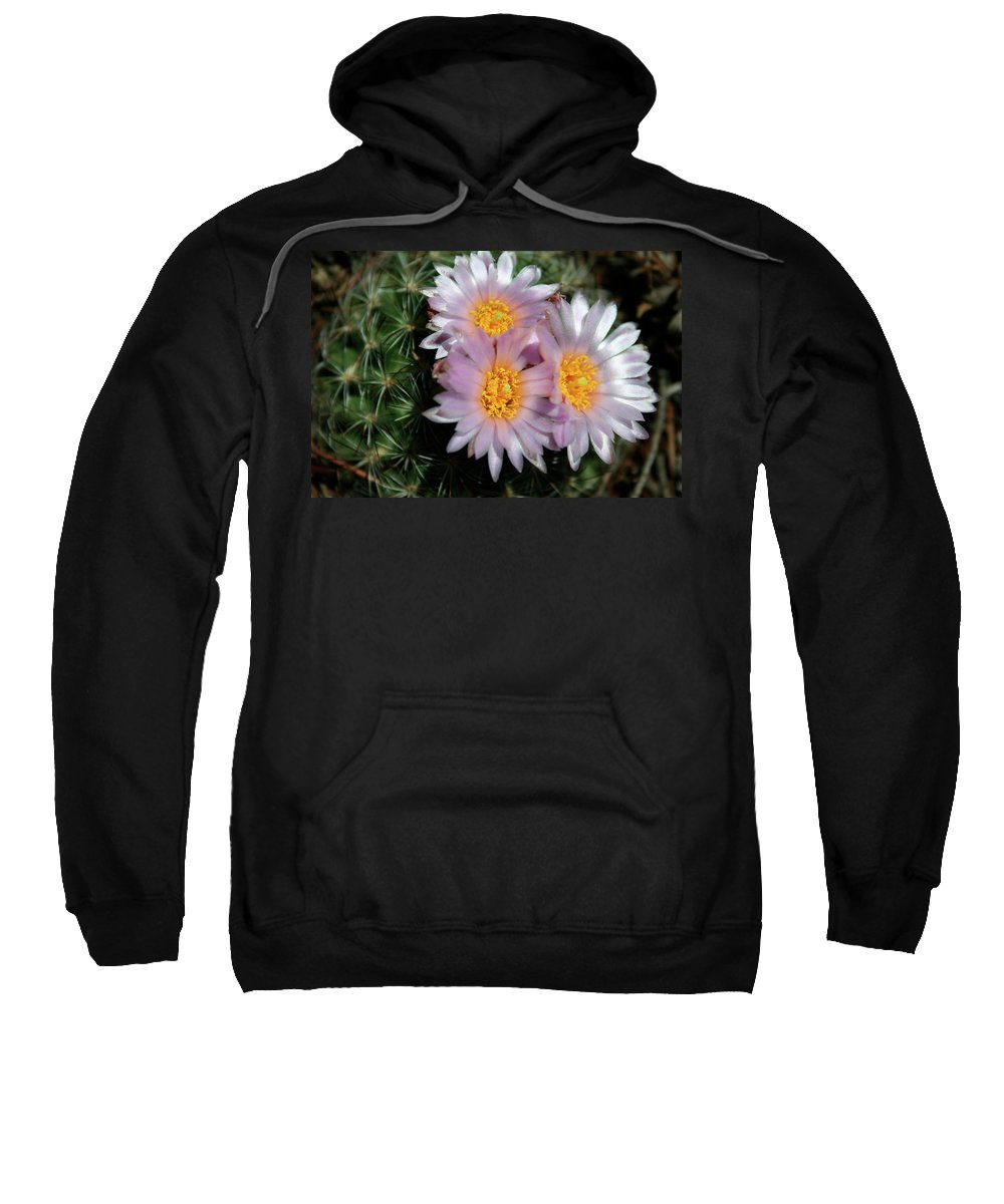 Cactus Sweatshirt featuring the photograph Cactus Flower by Ric Bascobert