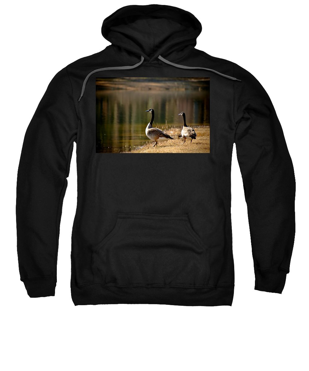Goose Sweatshirt featuring the photograph Canada Geese In Golden Sunlight by Rich Leighton