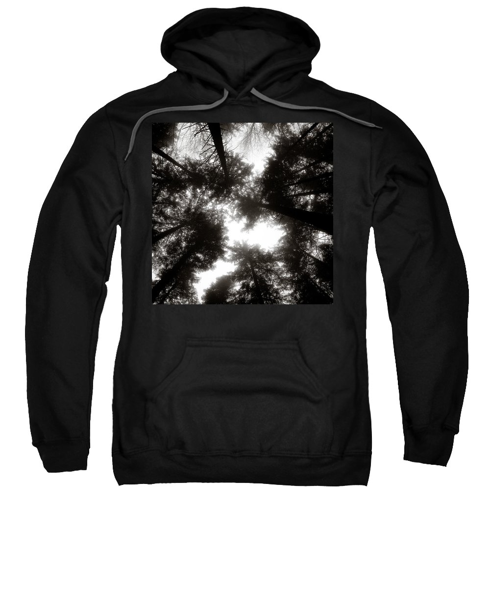 Trees Sweatshirt featuring the photograph Canopy by Dave Bowman