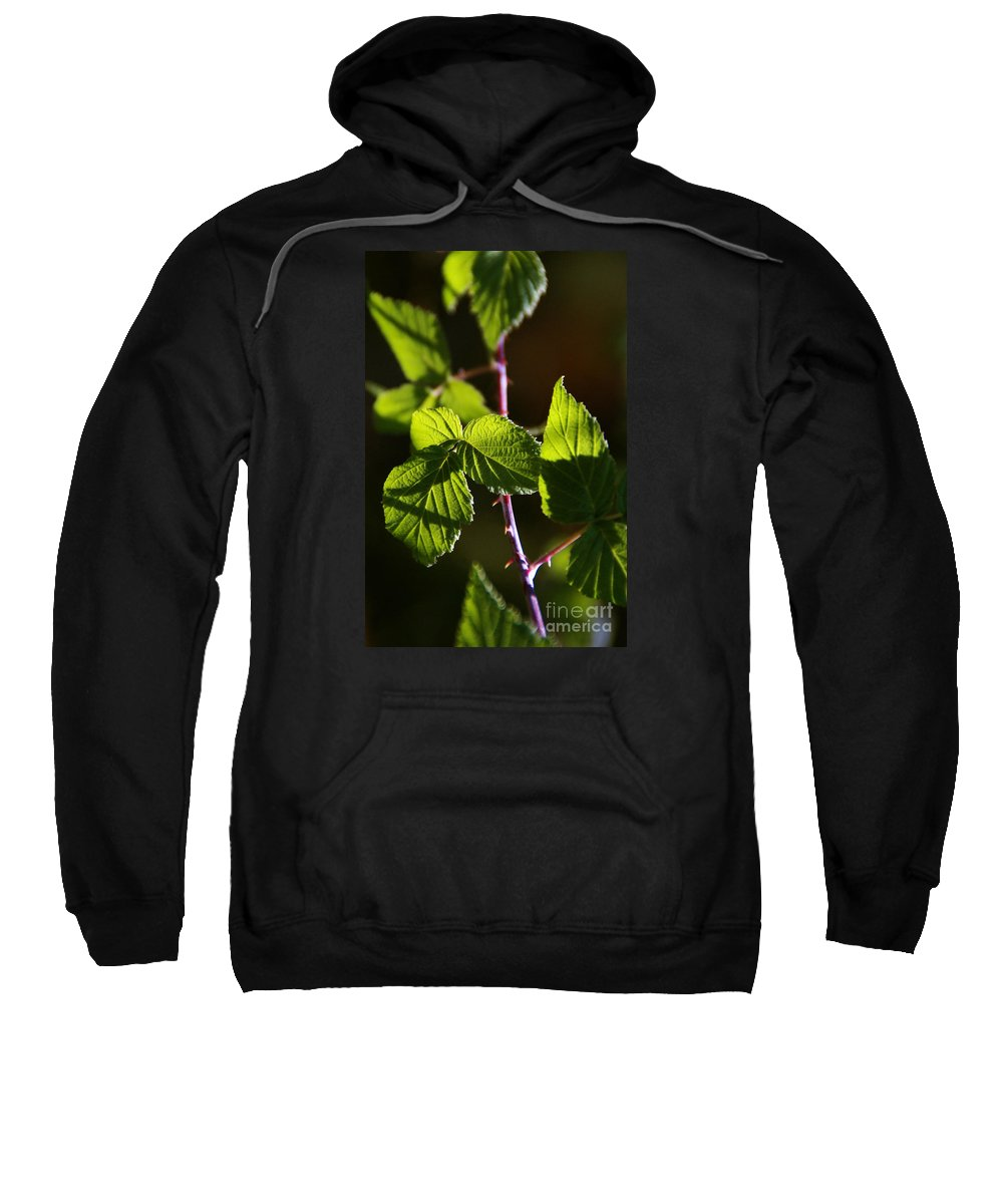 Vine Sweatshirt featuring the photograph Captured In Morning Light by Linda Shafer