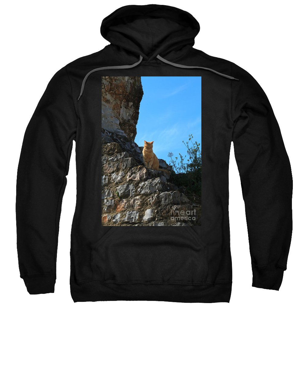 Cat Sweatshirt featuring the photograph Castle Cat by Louise Heusinkveld