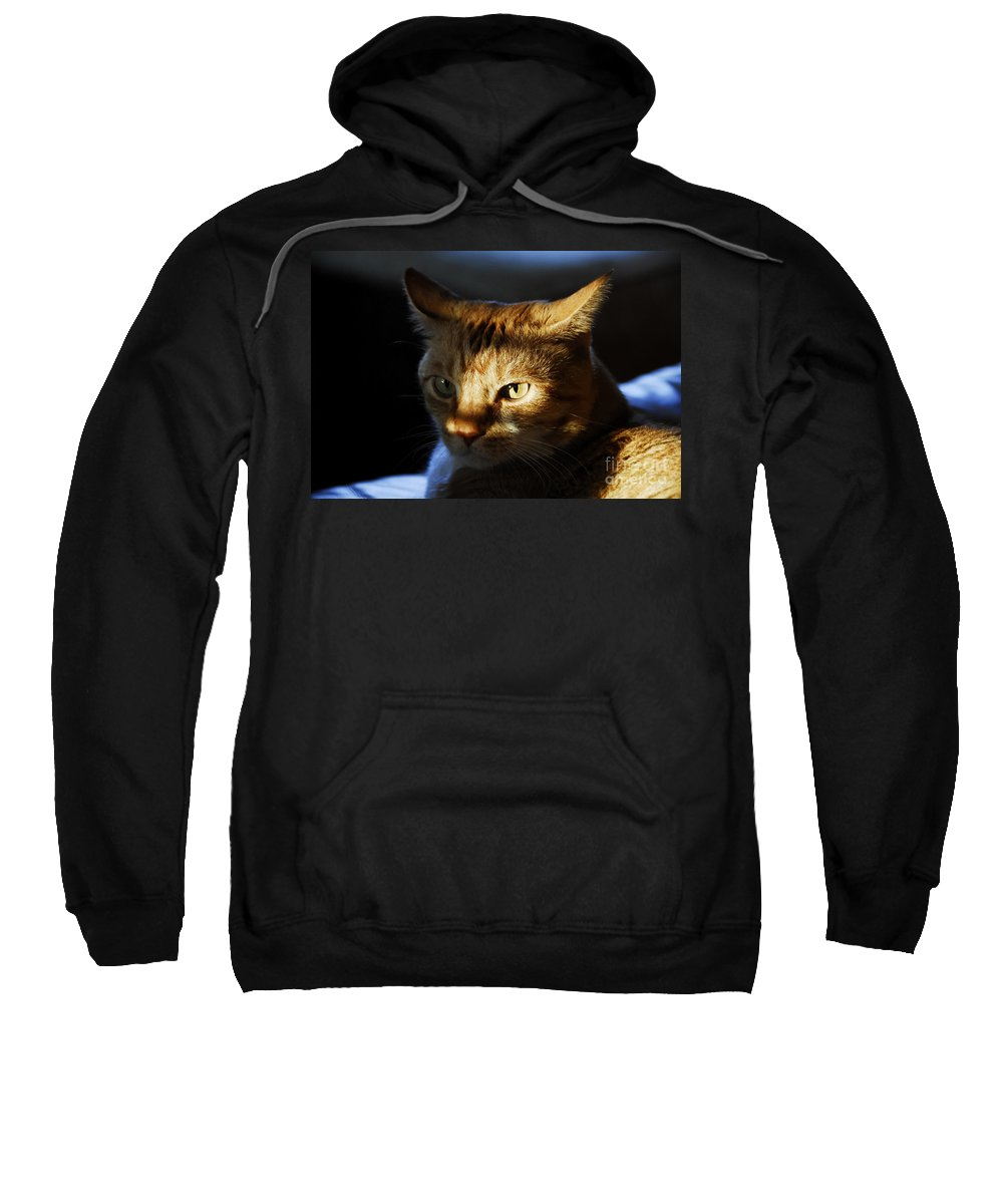 Cat.feline Sweatshirt featuring the photograph Catfish by David Lee Thompson