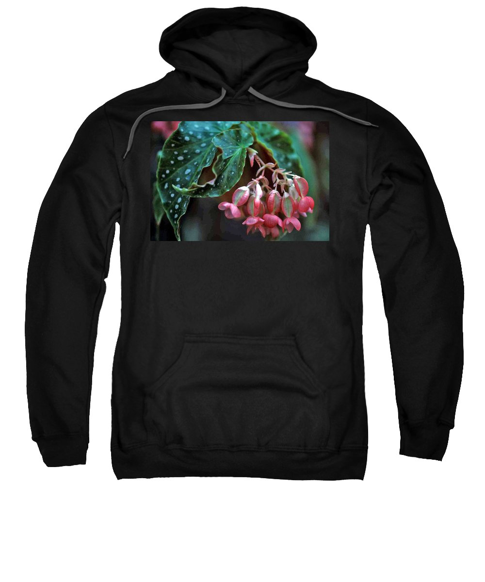 Cat's Paw Begonia Sweatshirt featuring the photograph Cat's Paw Begonia by Laurie Paci