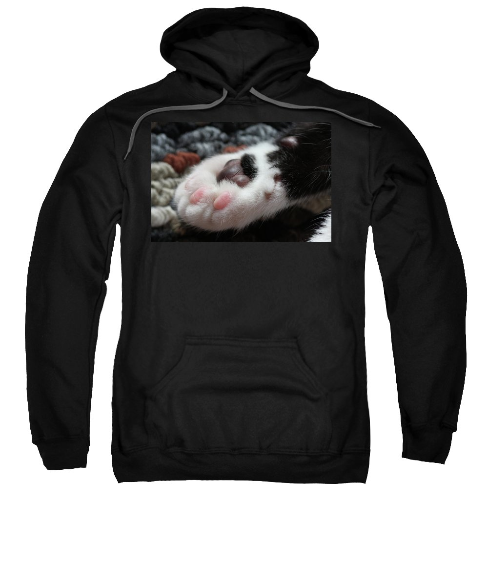 Cat Sweatshirt featuring the photograph Cats Paw by Kim Henderson