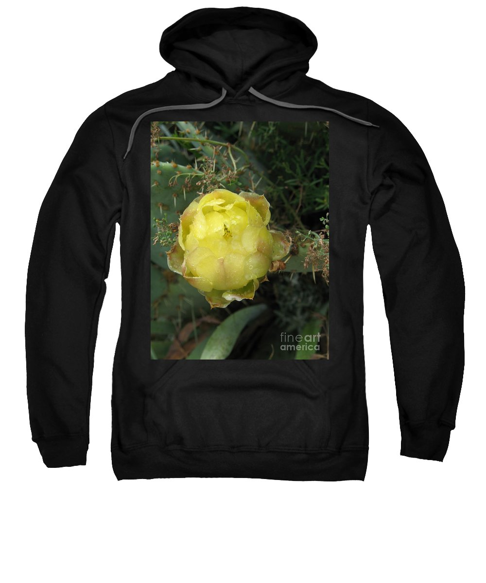 Catus Sweatshirt featuring the photograph Catusbud With Dew by Christiane Schulze Art And Photography