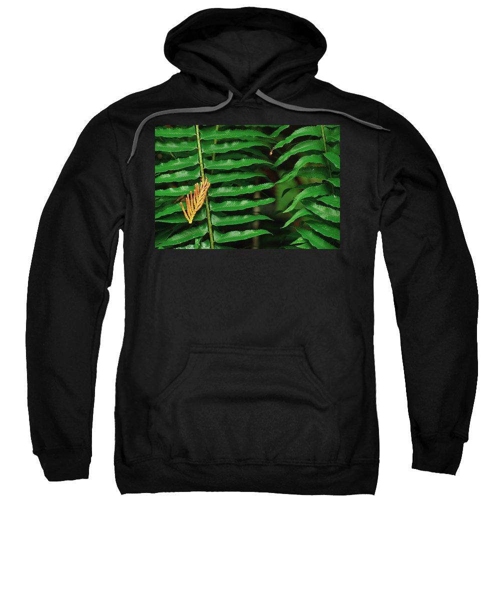 Fern Sweatshirt featuring the photograph Cedar And Fern by Karen Ulvestad