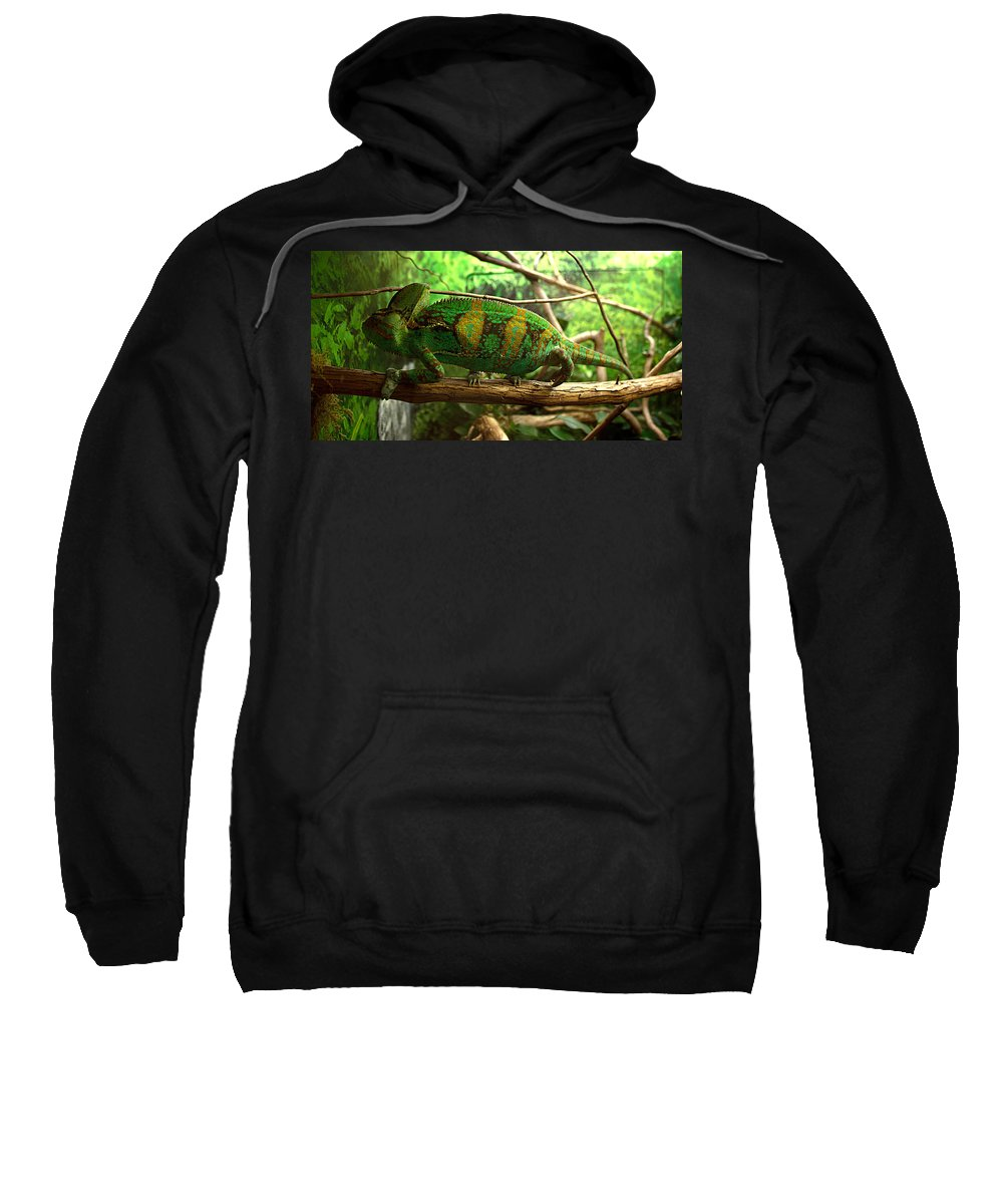 James Smullins Sweatshirt featuring the photograph Chameleon by James Smullins