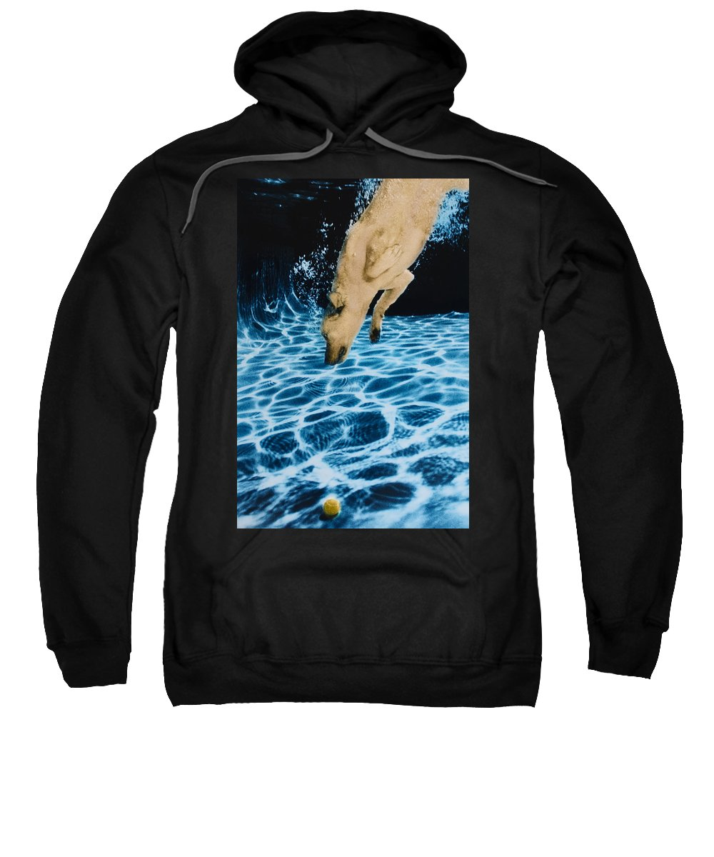 Dog Sweatshirt featuring the photograph Chase 2 by Jill Reger