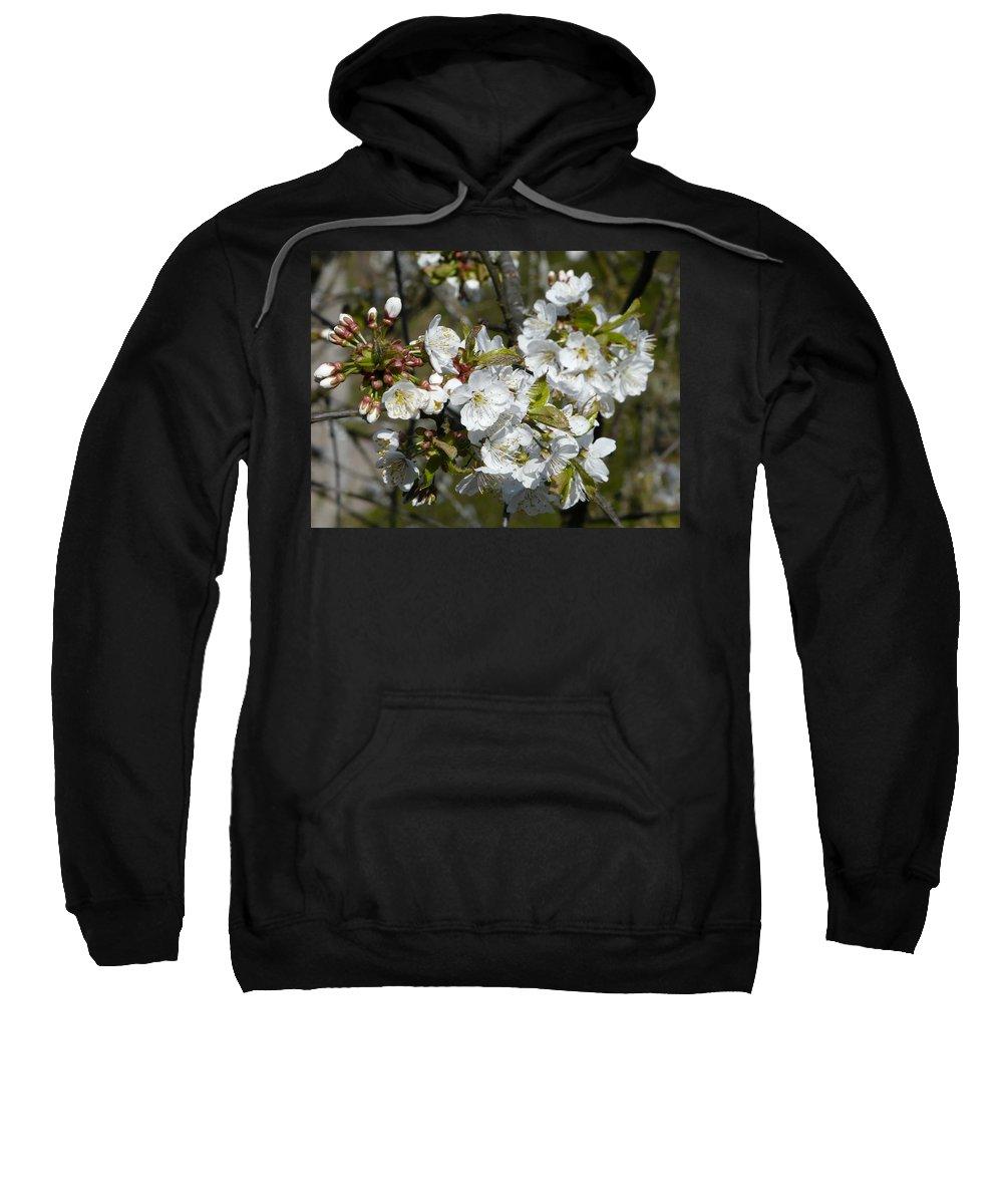Cherry Sweatshirt featuring the photograph Cherry Blossom by Valerie Ornstein