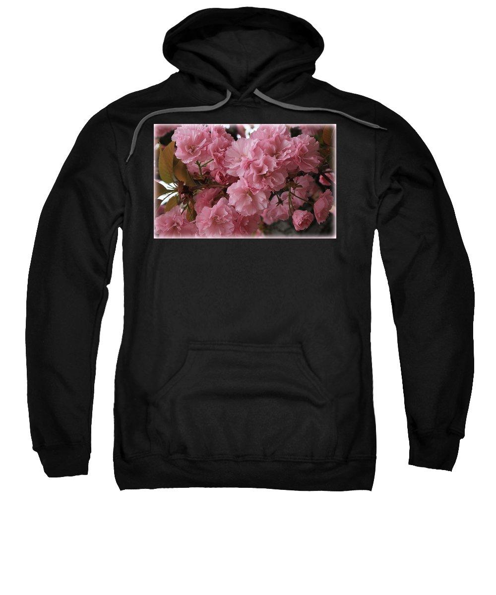 Macro Sweatshirt featuring the photograph Cherry Blossoms by Dora Sofia Caputo Photographic Design and Fine Art