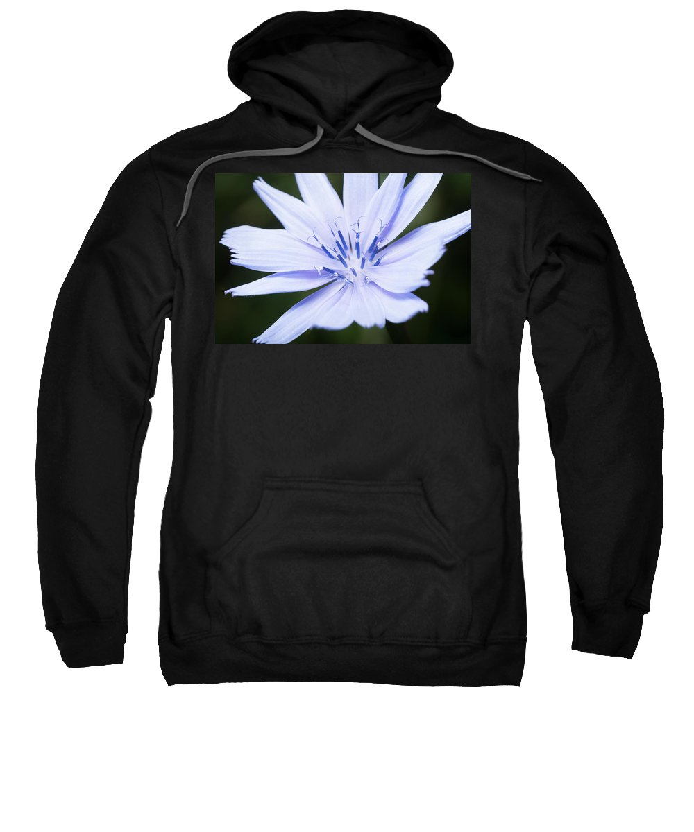 August Sweatshirt featuring the photograph Chicory by David Taylor