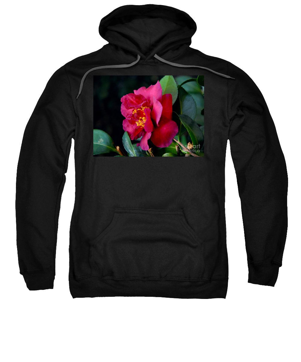 Camellia Sweatshirt featuring the photograph Christmas Camellia by Marie Hicks