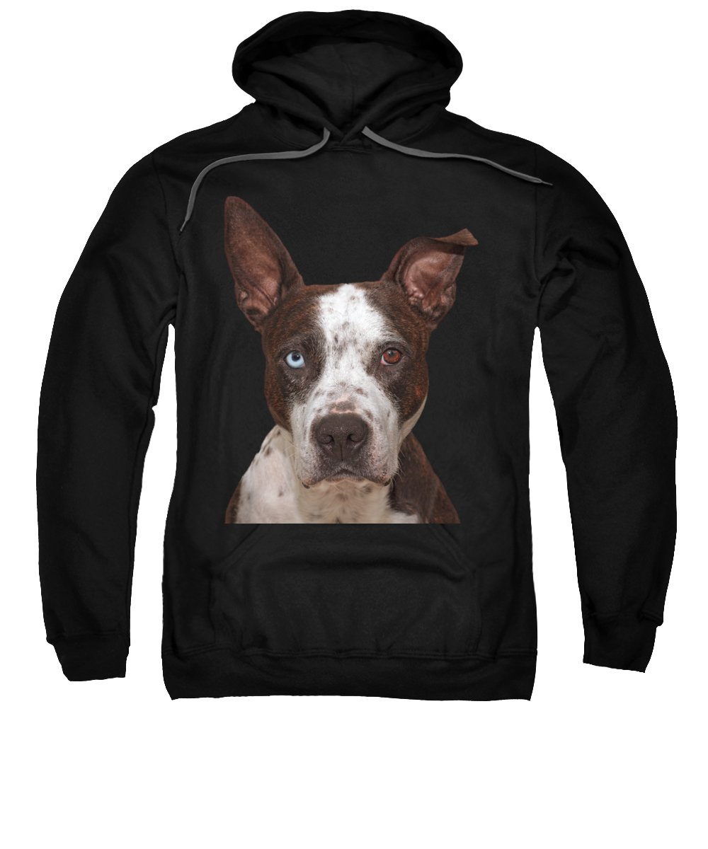 Animal Sweatshirt featuring the photograph Cleo by Brian Cross