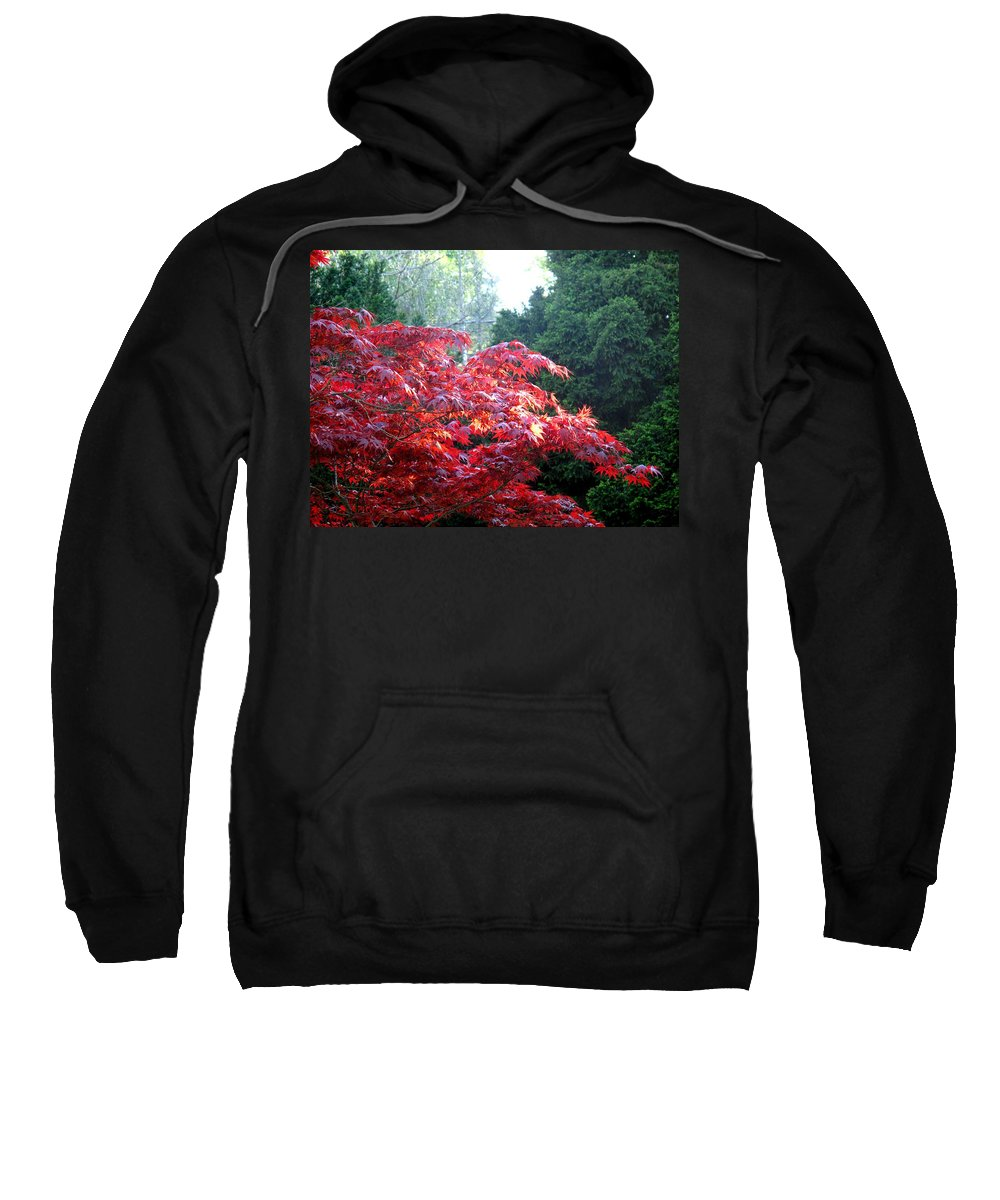 James Gardens Sweatshirt featuring the photograph Clouds Of Leaves by Ian MacDonald