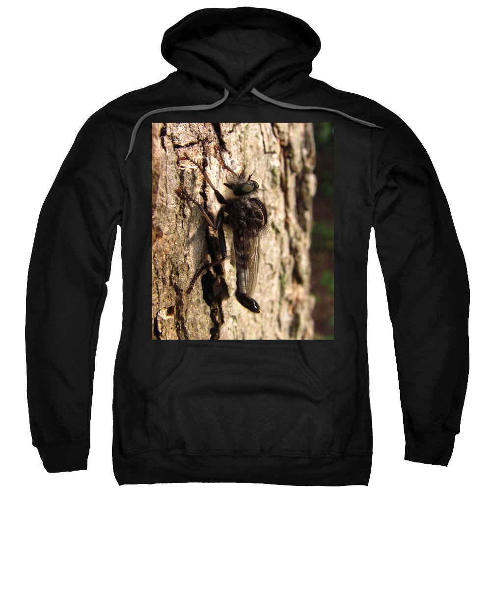 Club Tailed Robber Fly Images Club Tailed Robber Fly Prints Predatory Insects Predatory Fly Prints Entomology Biodiversity Forest Ecology Old Growth Forest Conservation Nature Sweatshirt featuring the photograph Club Tailed Robber Fly by Joshua Bales