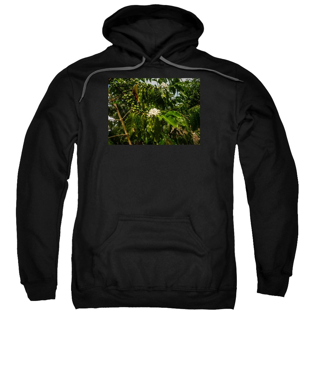 Coffee Sweatshirt featuring the photograph Coffee Cherries by Pamela Newcomb