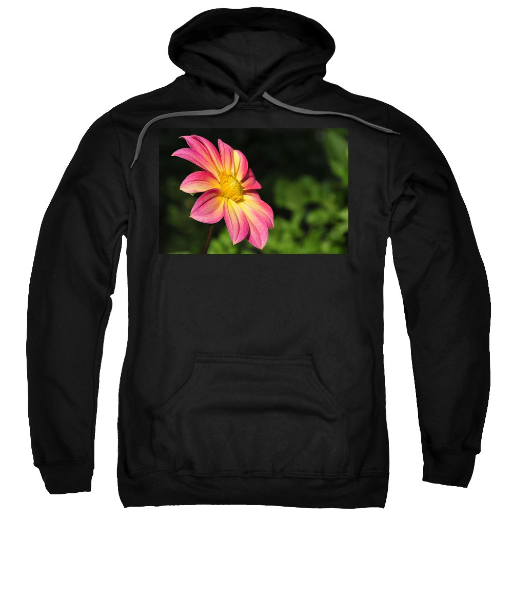 Flower Sweatshirt featuring the photograph Color Explosion by David Arment