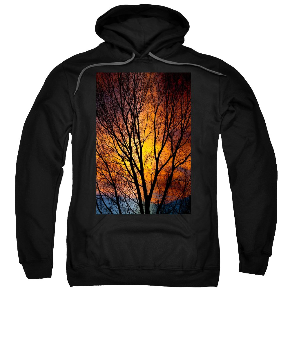 Vertical Sweatshirt featuring the photograph Colorful Tree Silhouettes by James BO Insogna