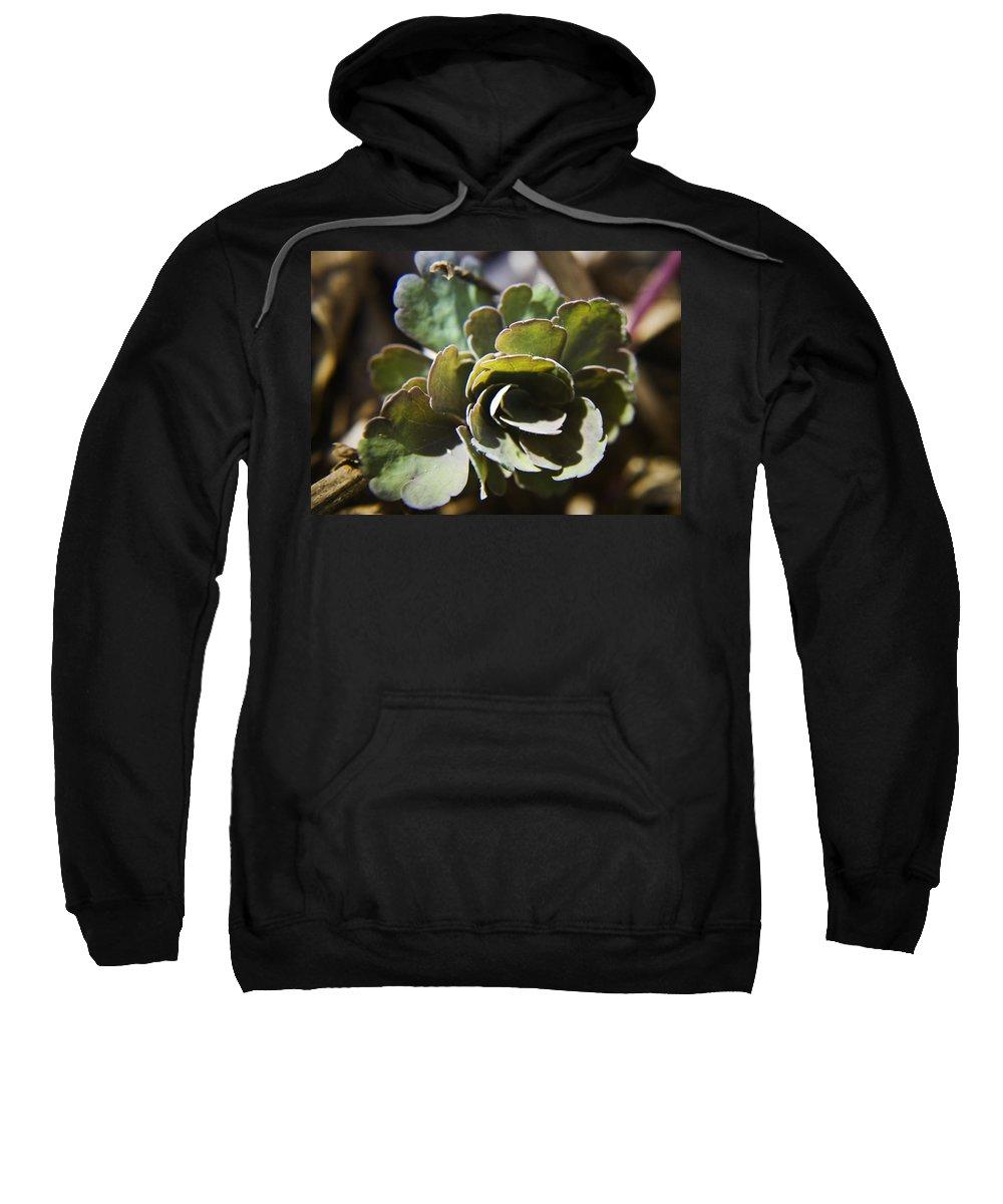 Aquilegia Sweatshirt featuring the photograph Columbine Foliage by Teresa Mucha