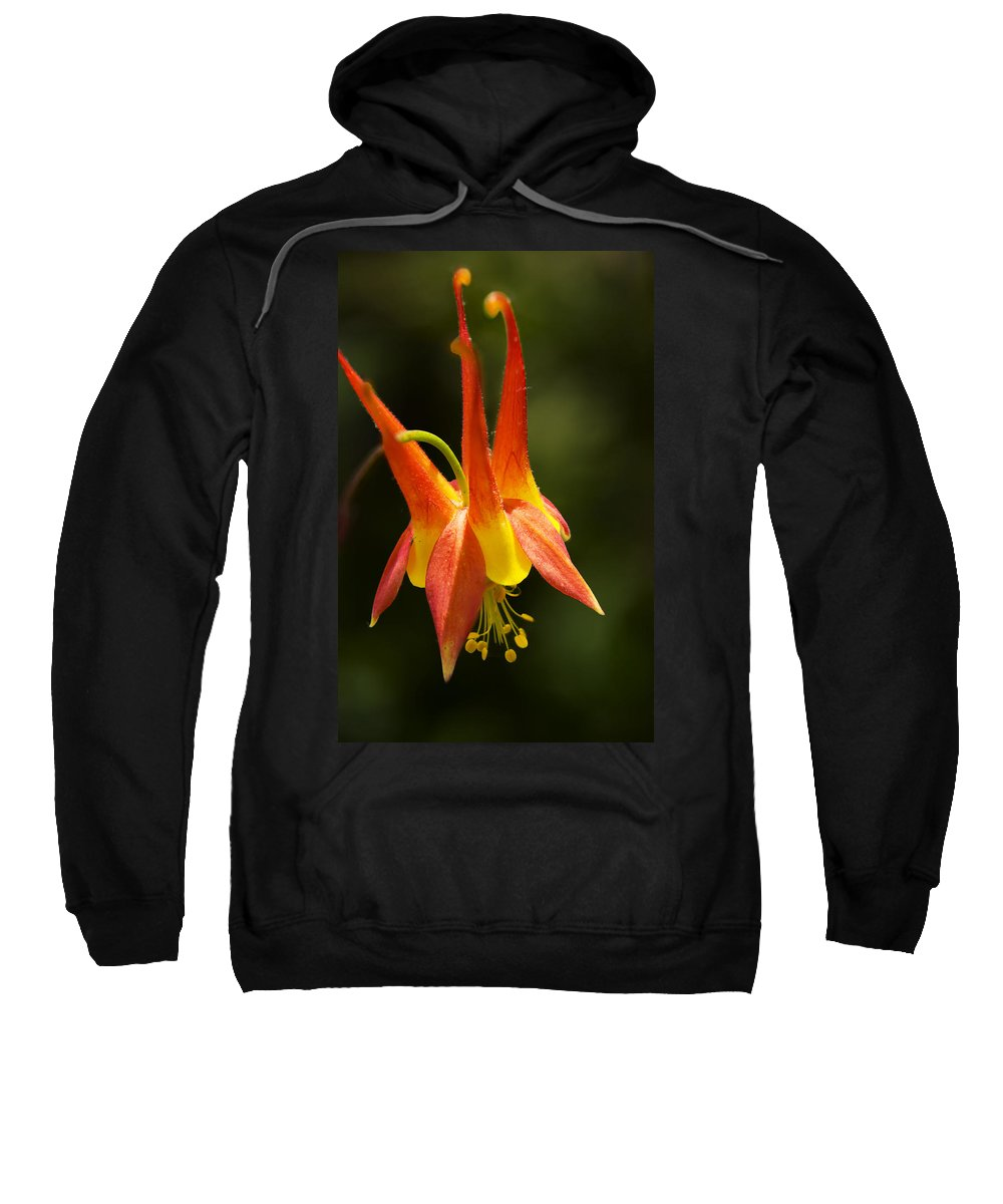 Flower Sweatshirt featuring the photograph Columbine by Thomas Morris