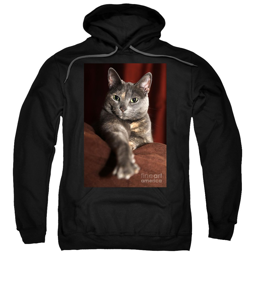 Kitty Sweatshirt featuring the photograph Come Here by Amanda Barcon
