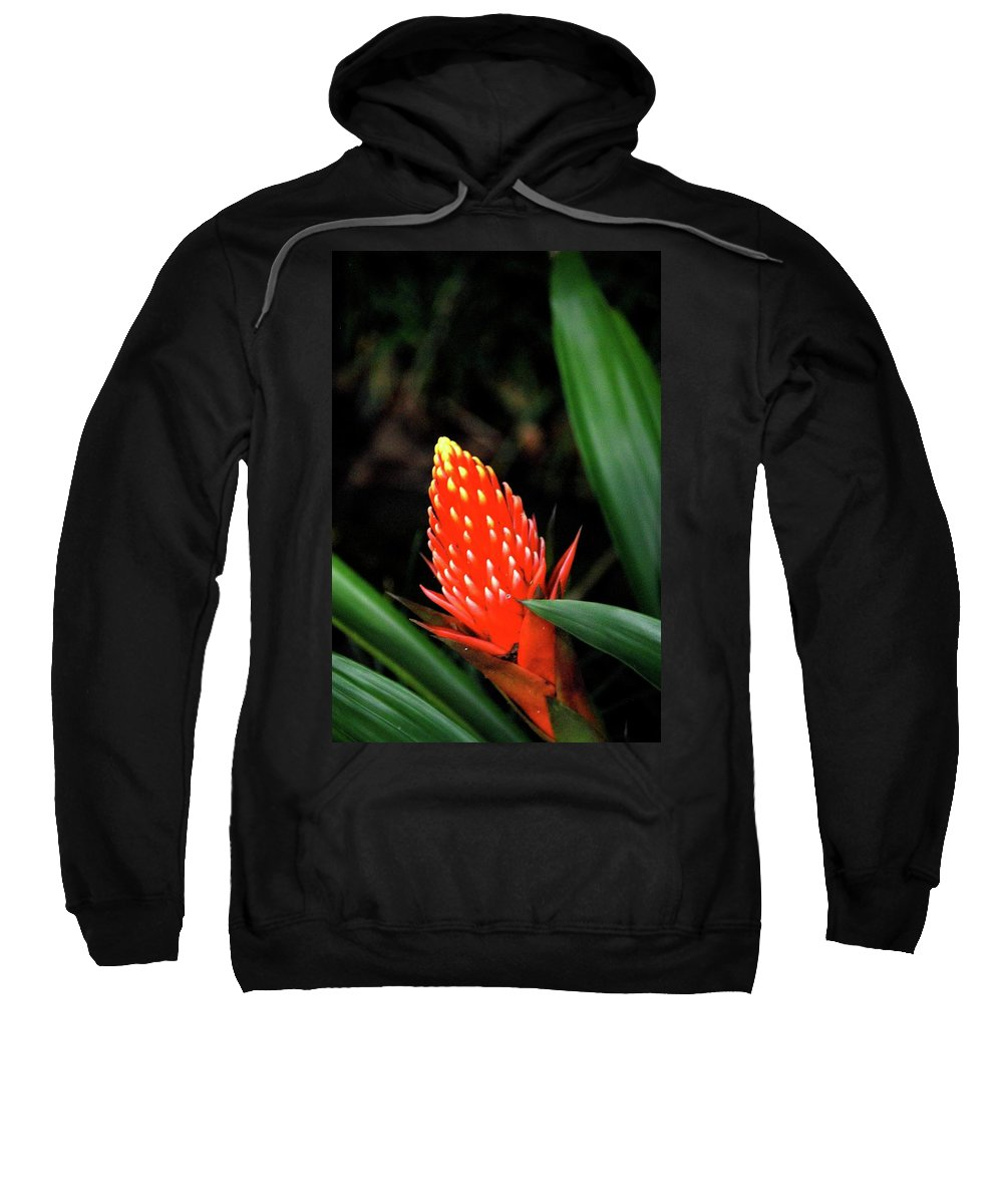 Red Flower Sweatshirt featuring the photograph Cone Of Color by Debbie Karnes