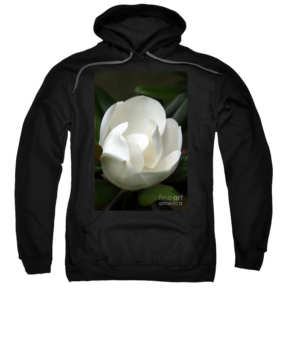 Magnolia Sweatshirt featuring the photograph Container by Amanda Barcon