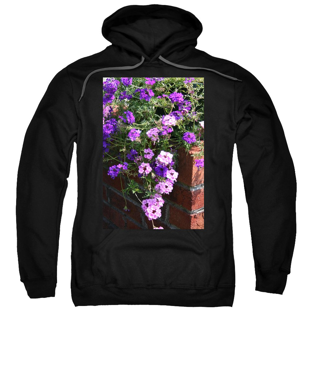 Flowers Sweatshirt featuring the photograph Cool And Warm by Lisa Stanley