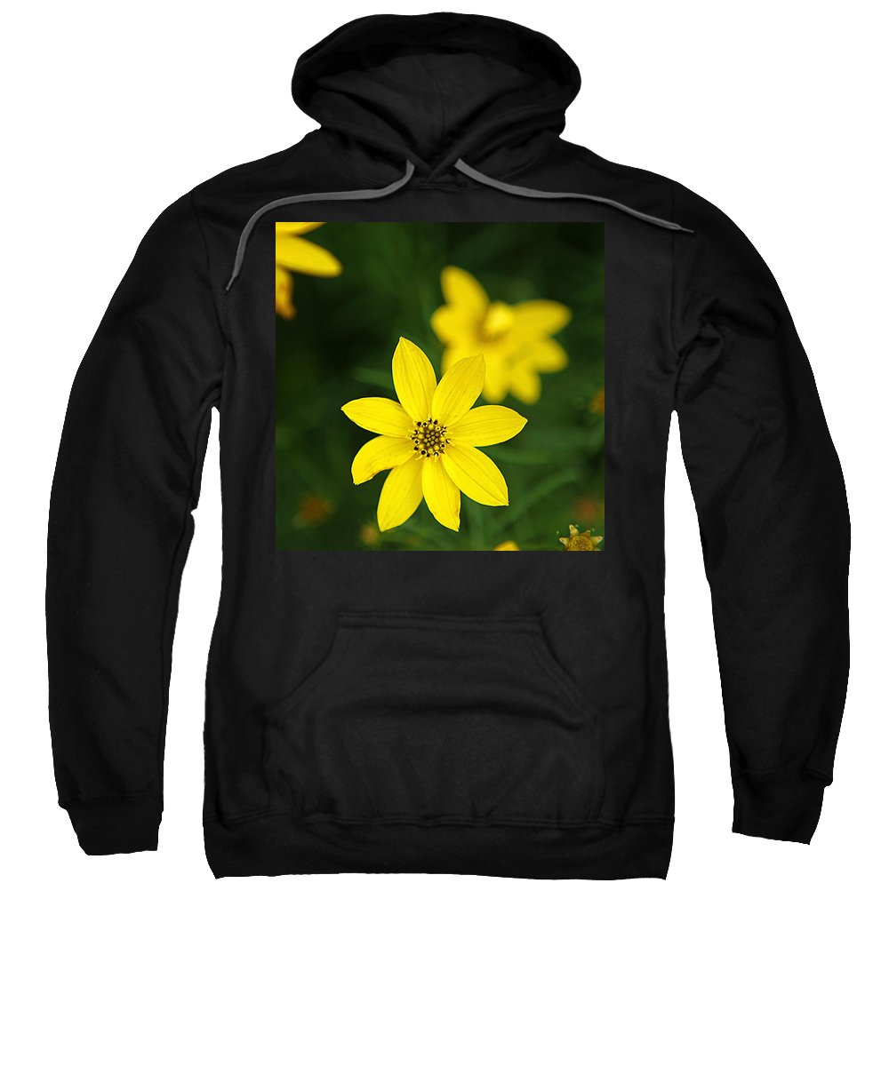 Landscape Sweatshirt featuring the photograph Coreopsis by Jean Macaluso