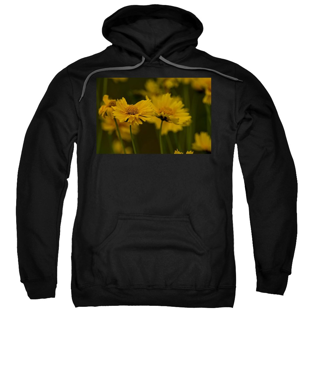 Coreopsis Sweatshirt featuring the photograph Coreopsis by Michael Cummings