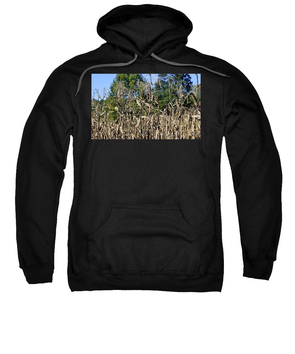 Corn Sweatshirt featuring the photograph Corn Stalks Drying by Teresa Mucha