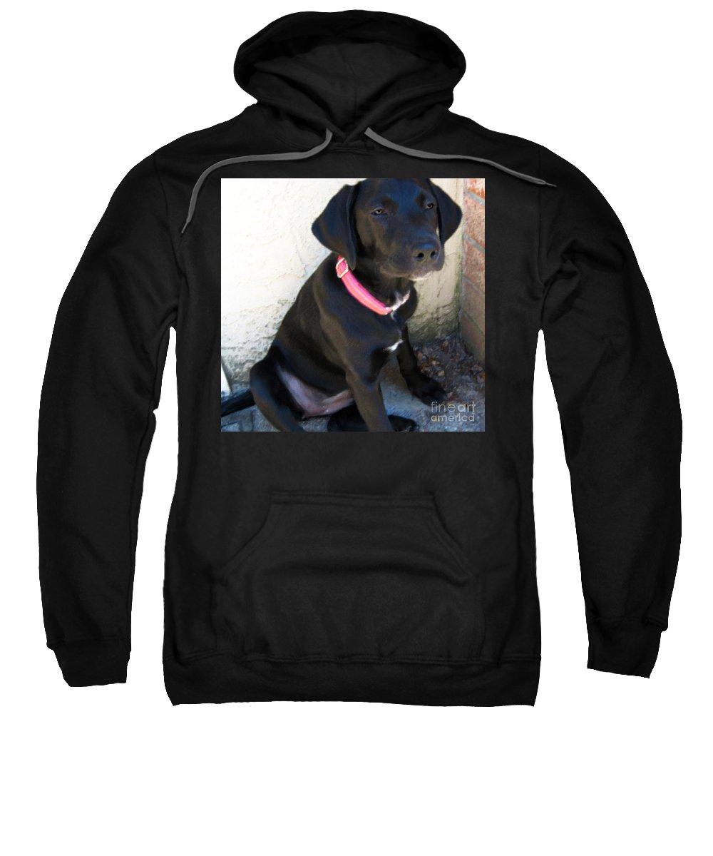 Dog Sweatshirt featuring the photograph Cornered by Rhonda Chase