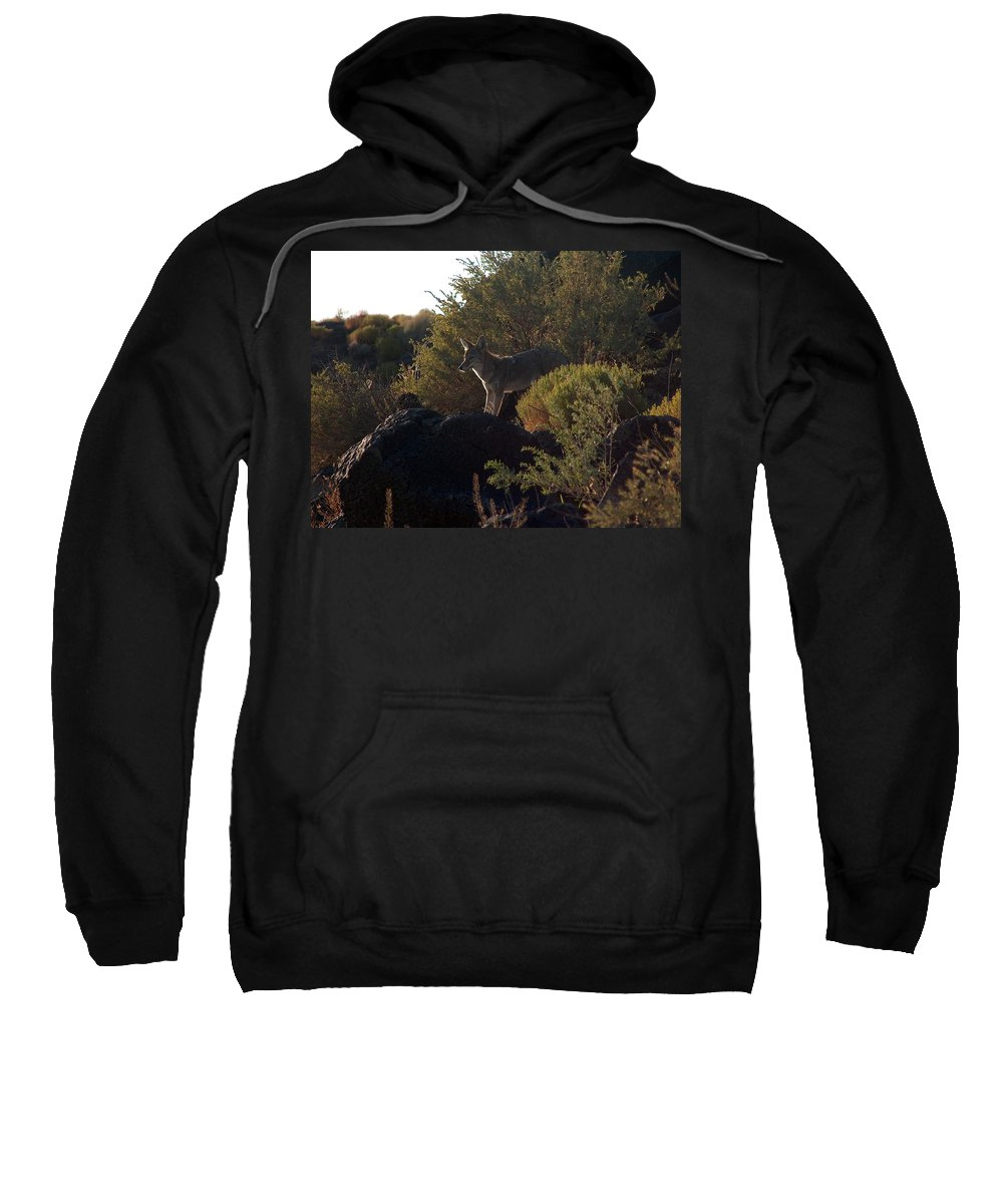 Coyote Sweatshirt featuring the photograph Coyote At The Petrogyphs 2 by Tim McCarthy