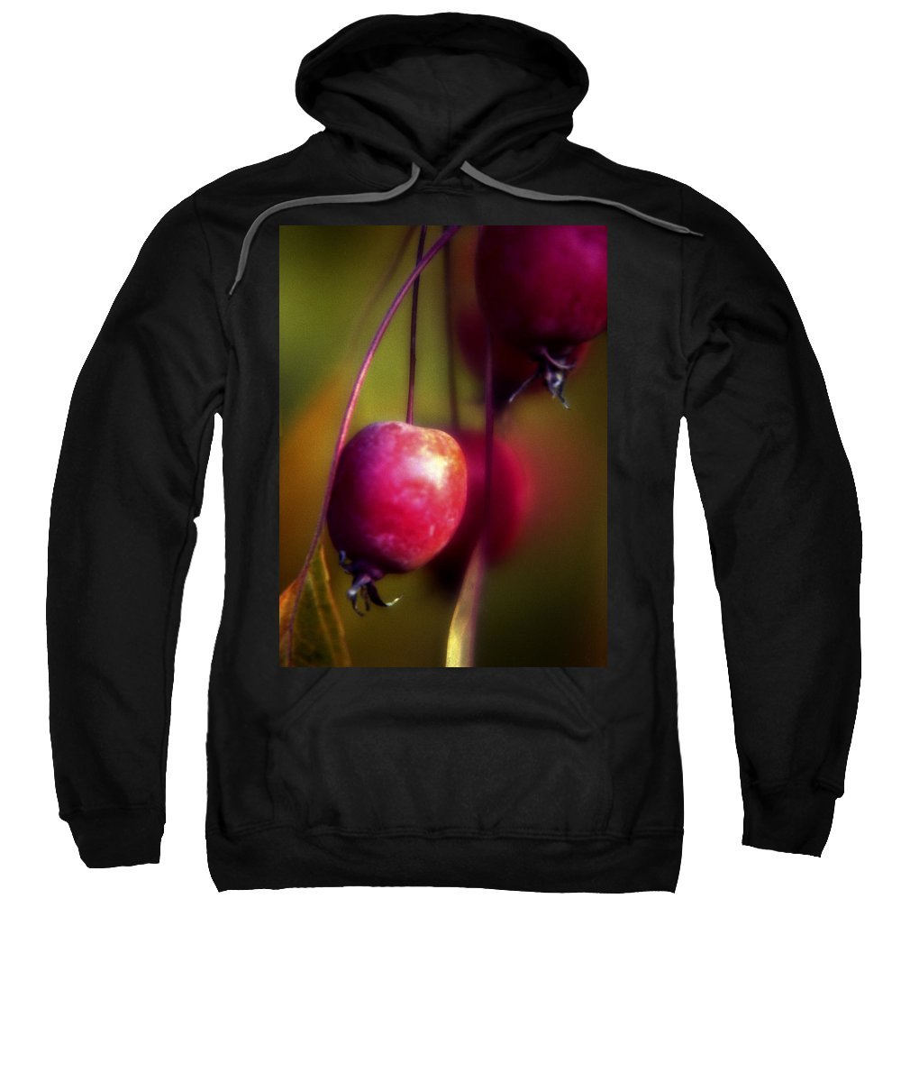 Macro Sweatshirt featuring the photograph Crabapple by Lee Santa