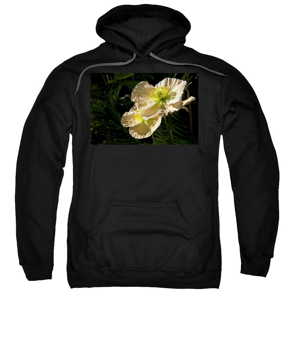 Flower Sweatshirt featuring the photograph Creamy Poppies by Phyllis Denton