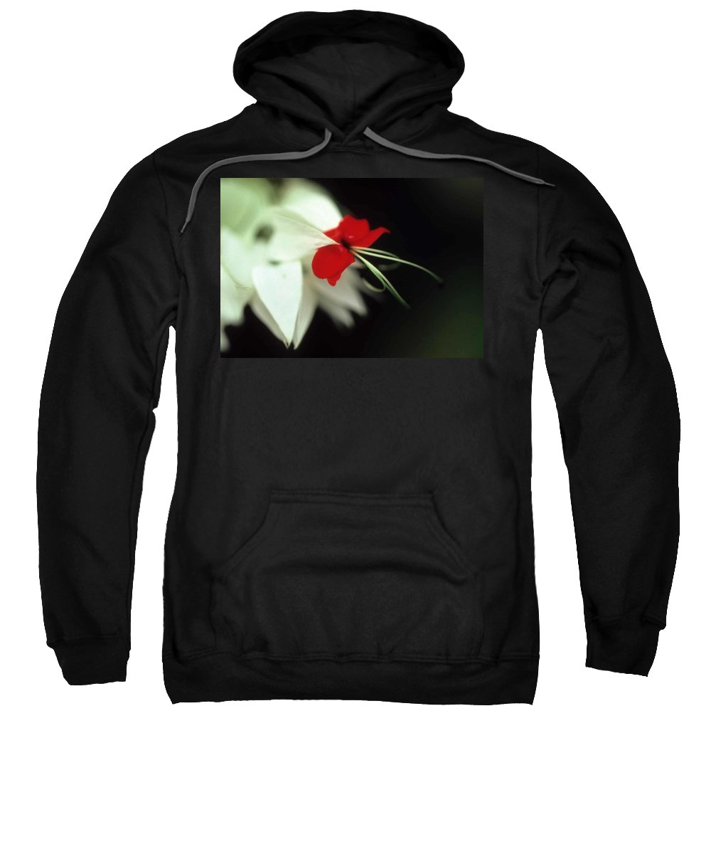Crown Of Thorns Sweatshirt featuring the photograph Crown Of Thorns by Laurie Paci