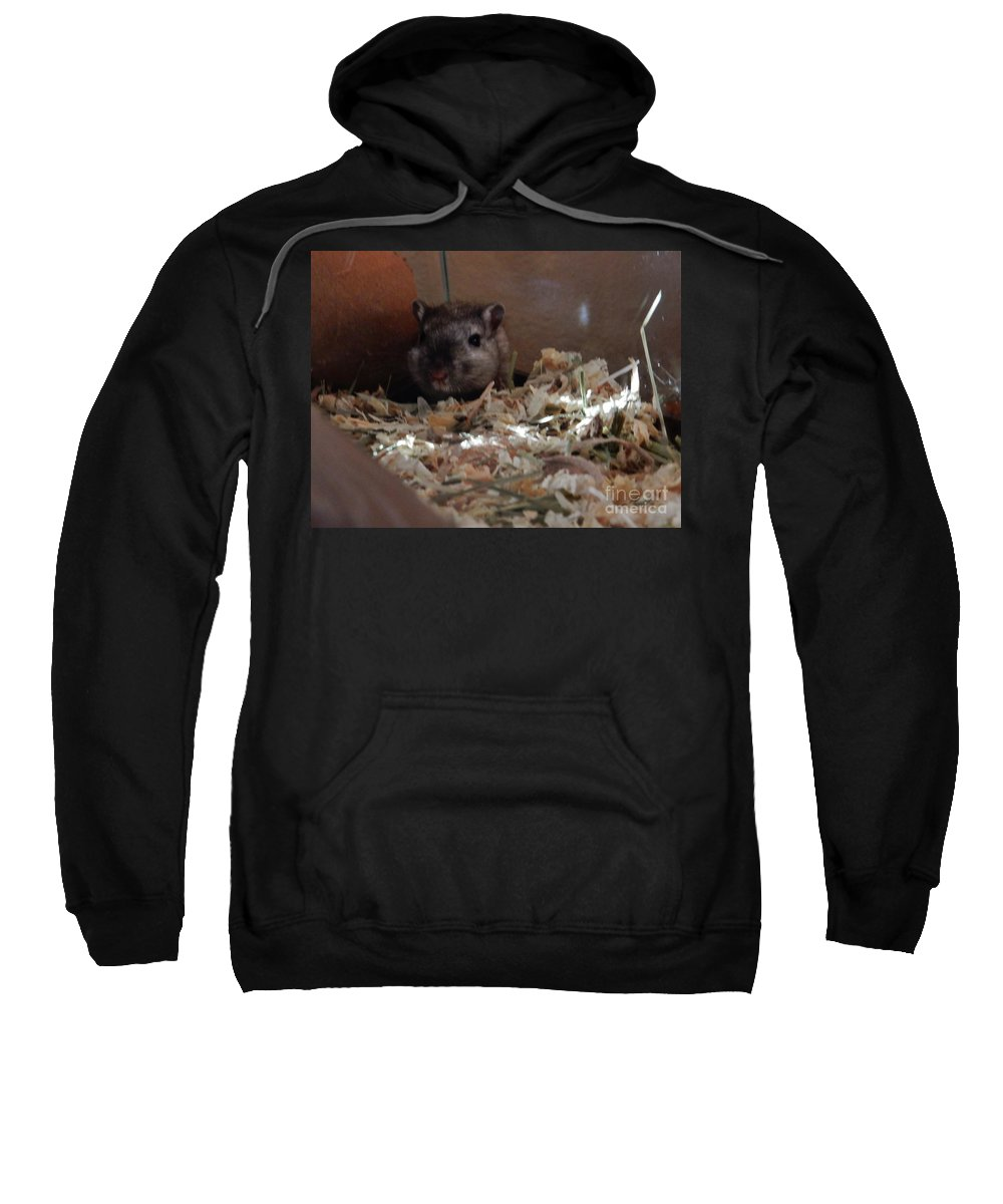 Gerbils Sweatshirt featuring the photograph Crumpet In The Morning by CL Redding