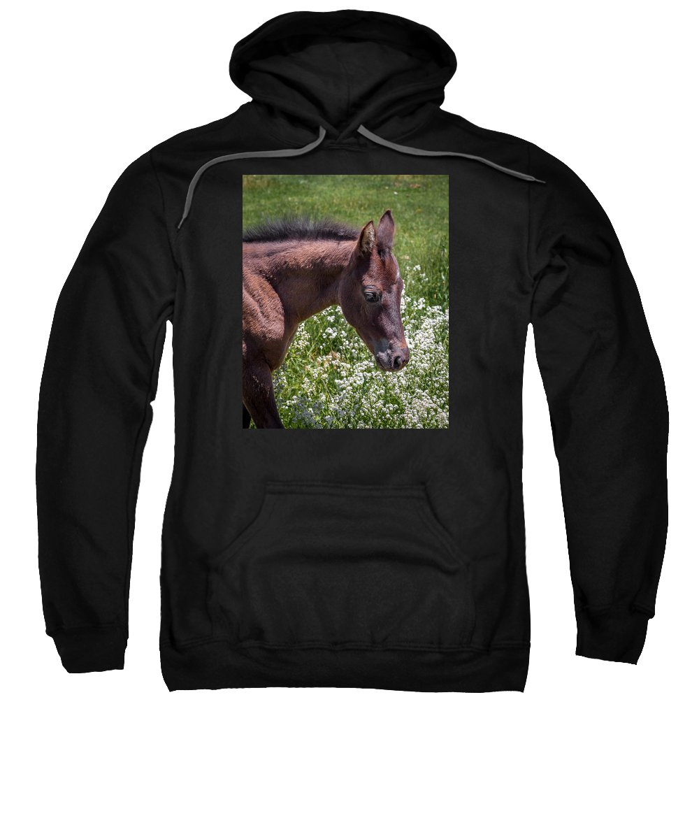 Horse Sweatshirt featuring the photograph Curious by Dustin Clark