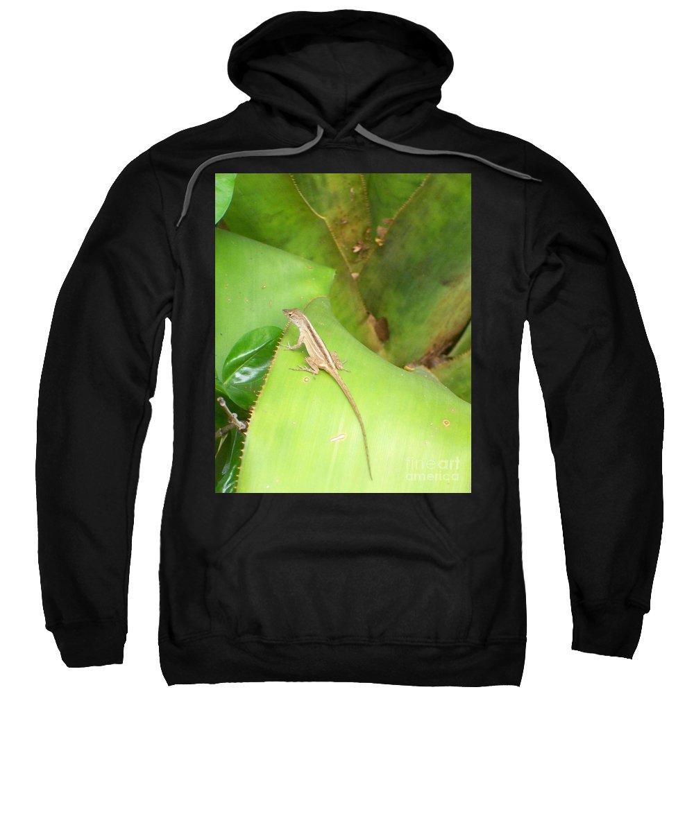 Florida Sweatshirt featuring the photograph Curious Lizard I by Chris Andruskiewicz